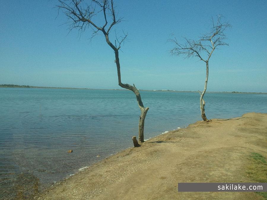 Сакское озеро Южный берег возле санатория Бурденко