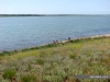 Сакское озеро пляж возле санатория Сакрополь
